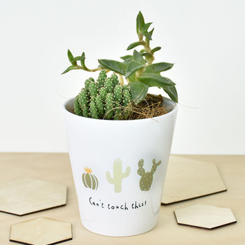 normal_can-t-touch-this-catus-plant-pot